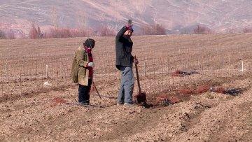 400 000 яблоневых саженцев высадят в этом году в селе Майтобе Тюкубасского района.