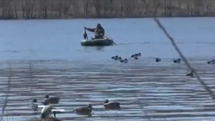 С 7 марта в ЮКО открыт сезон весенней любительской охоты на селезней диких уток