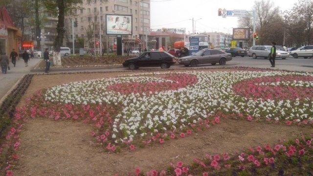 555 миллионов тенге, в этом году, потратит Шымкент на озеленение