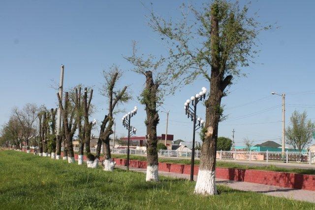 Вырубка деревьев в Шымкенте
