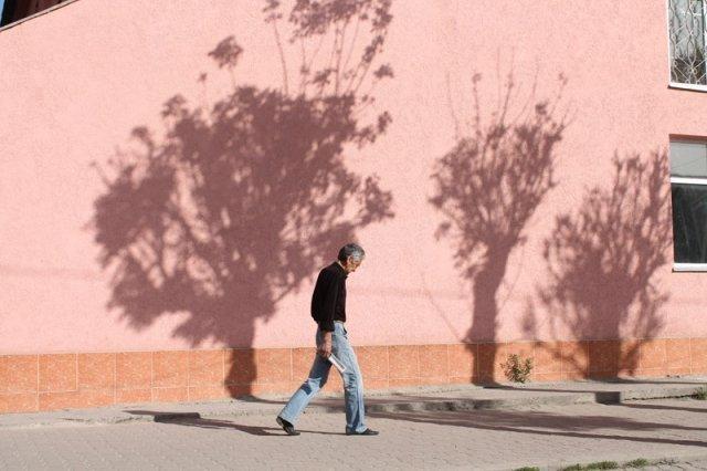 Скоро в Шымкенте от деревьев останется только тень