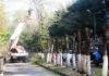 Топпинг (обрезка) деревьев в Алматы