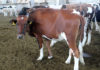 На всех крупных скотных рынках откроются центры по дезинфекции животных