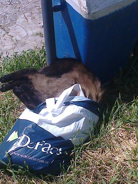 Труп кошки в пакете