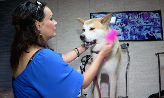В Шымкенте открылся уникальный салон для животных