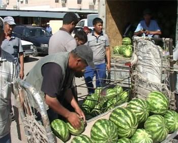 Насколько безопасны арбузы и дыни на рынках Шымкента