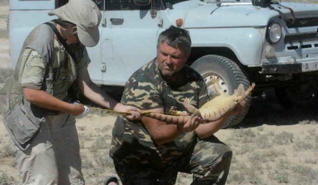 В Казахстане популяция серых варанов оказалась под угрозой