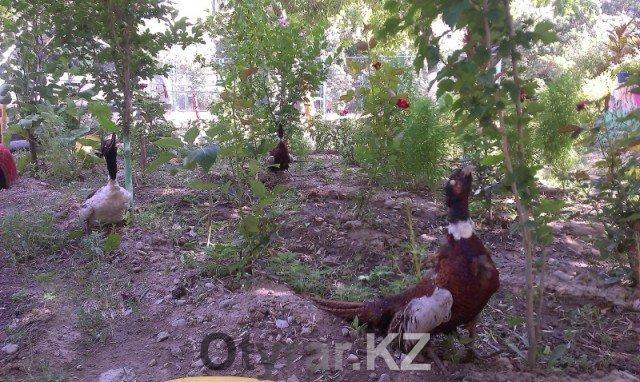 Жители Шымкента стремятся сделать свой двор лучшим