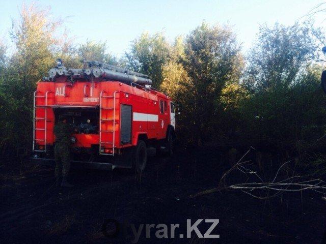 Пожар в шымкентском дендропарке