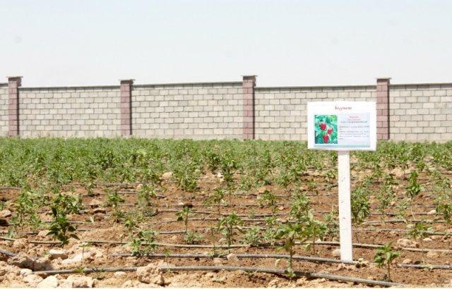 На площади в гектар будущие аграномы будут выращивать десятки сортов фруктов и овощей. Есть на территории учебно-производственной базы и склады, вместимостью до 10 тонн, где будет храниться уже готовая продукция