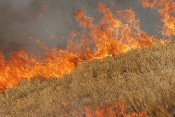 В Южно-Казахстанской области сгорело 40 гектаров пшеницы