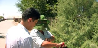 Мошкара в Отырарском районе представляет угрозу для людей и животных