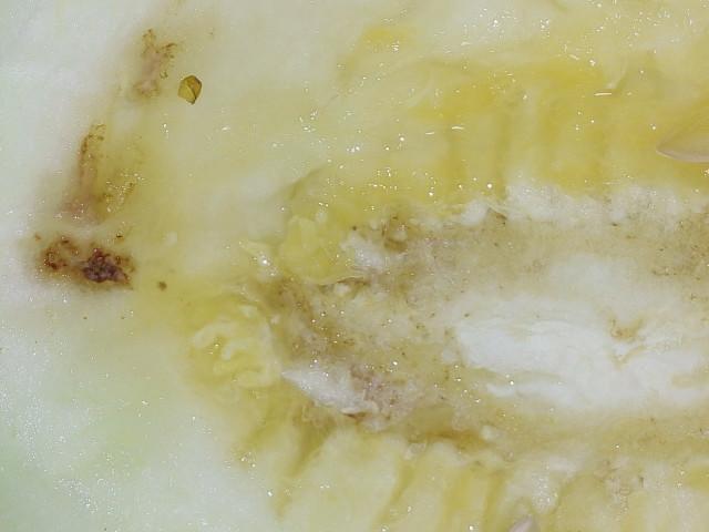 Дынная муха выявлена уже в Алматы, то есть во всех районах, где выращивают бахчевые культуры.