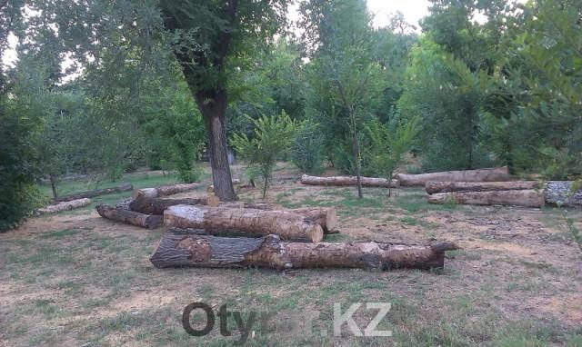 Шымкентцы встали на защиту парка имени Абая