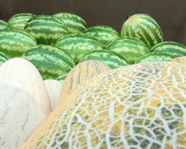 В Шымкенте становится опасным есть дыни и арбузы