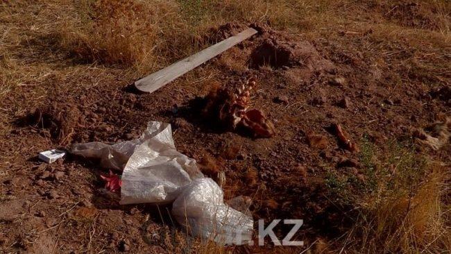 В Шымкенте существует кладбище домашних животных