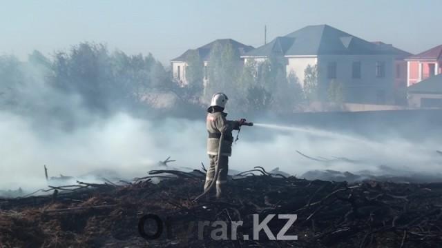 Пожар в дендропарке