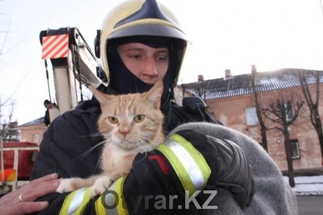 Как работают южноказахстанские спасатели