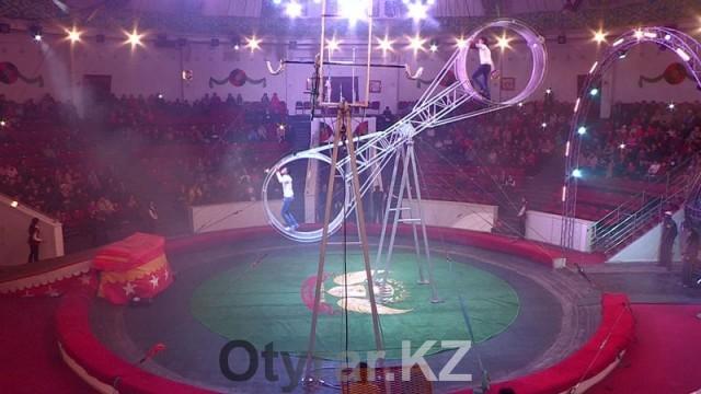 В шымкентском цирке проходят новые уникальные представления