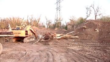 В Шымкенте провели незаконную вырубку деревьев