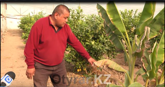 В хозяйстве начали выращивать и бананы