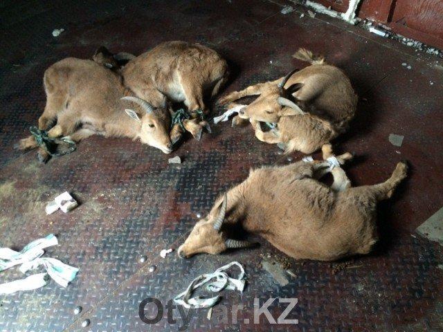 Контрабанду редких видов животных предотвратили пограничники в ЮКО