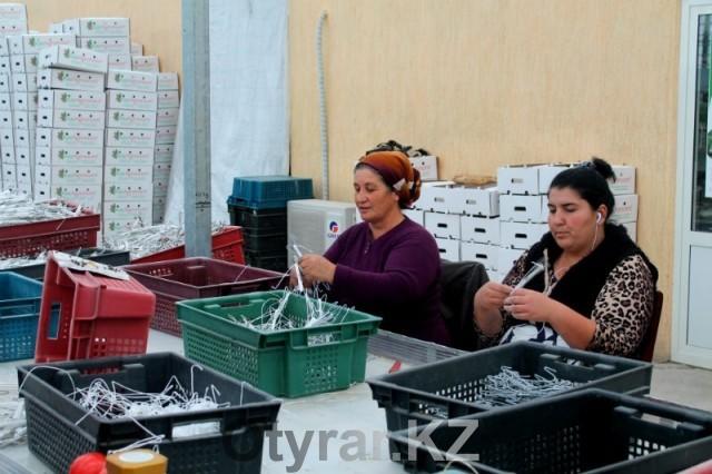 В Южном Казахстане растет спрос на помидоры и огурцы из местных теплиц