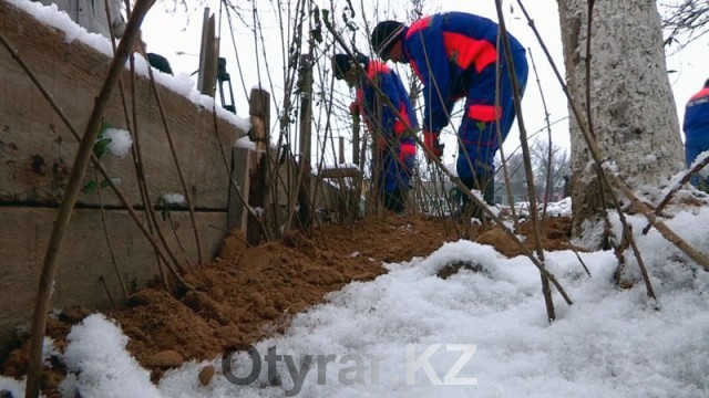 В Шымкенте полностью завершены работы по озеленению города