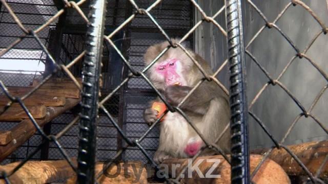 Постояльцы шымкентского зоопарка перешли на зимний режим