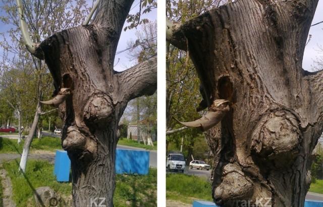 Фантазии природы - необычное дерево