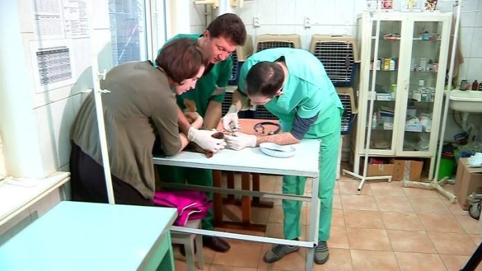 Пластическая операция собаке