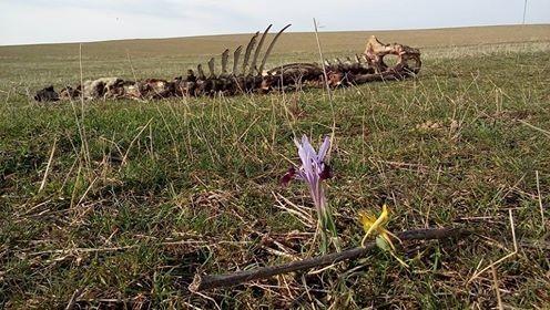 Для кого-то и теплая зима оказалась непереносимой... Подписал свое фото Николай Дорогов