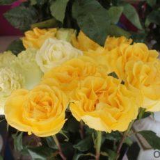 Голландская роза - 500 тенге