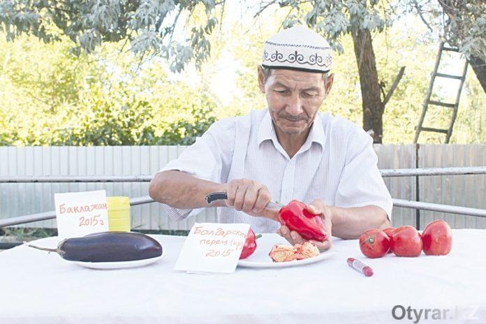 Как правильно готовить рассаду