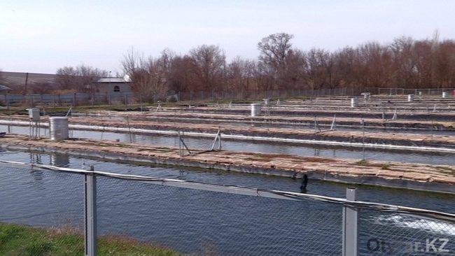 Бассейны для выращивания фолрели