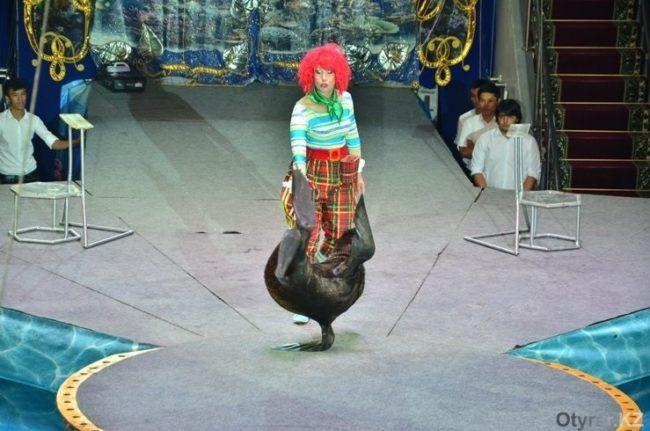 Думан шоу к Наурызу. Онтустик цирк