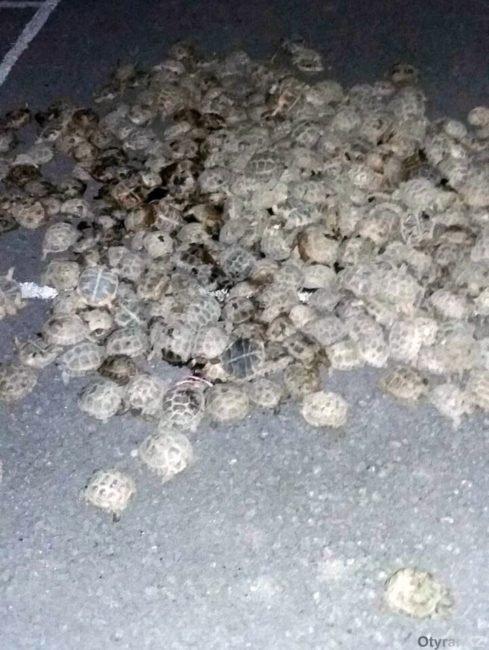 Пограничники ЮКО обнаружили 100-литровую бочку с живыми черепахами