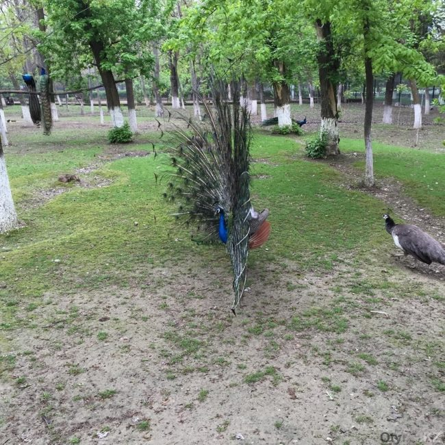 Гора в зоопарке Шымкента дождалась своих козлов