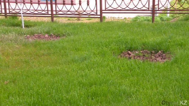 Елки утрали в парках Шымкента