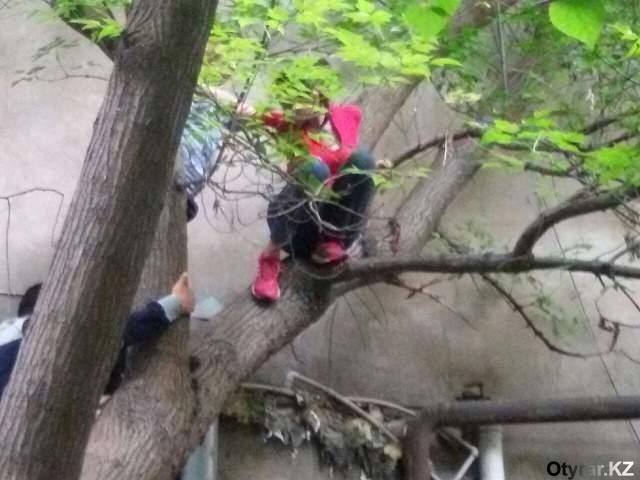 В Шымкенте женщина угрожала спрыгнуть с высокого дерева