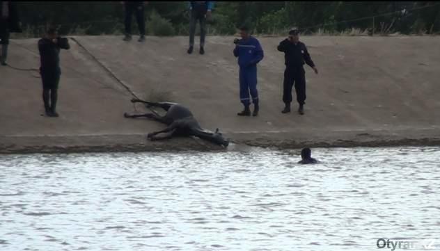 Причиной гибели лошадей в шымкентском массиве Текесу стал сильнейший ливень с градом