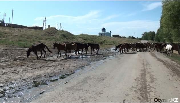 Бурный поток уничтожил лошадей в шымкентском поселке Текесу