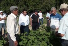 """Сапарбек Туякбаев: """"Мы должны быть готовыми к борьбе с вредителями"""""""