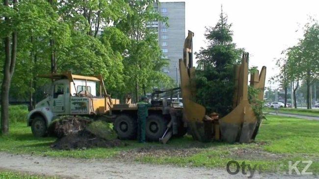 Шымкентский дендропарк приобрел супер-машину для пересадки деревьев