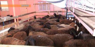 В Шымкенте откроется пункт для забоя скота