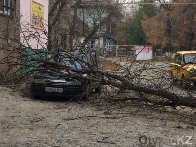 Упавшее от ветра дерево придавило автомобиль и женщину