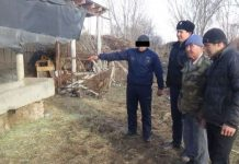 Похитители скота во время оперативных мероприятий