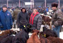 На скотном рынке Шымкента ужесточили правила продажи