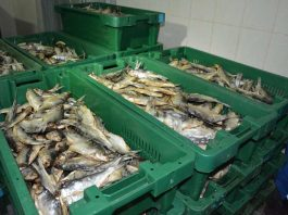 Шардаринская рыба