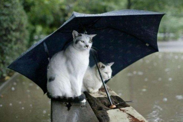 Прогноз погоды